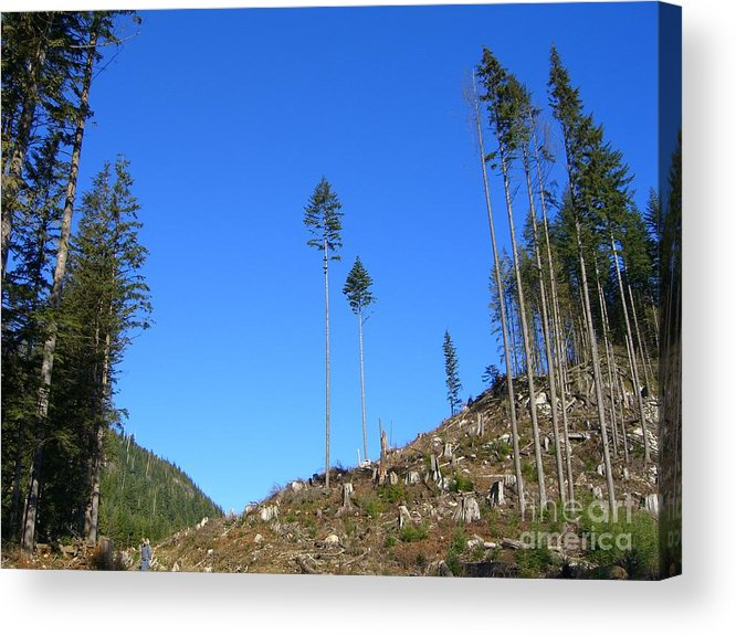 British Columbia Acrylic Print featuring the photograph Tall Timbers by Jim Thomson
