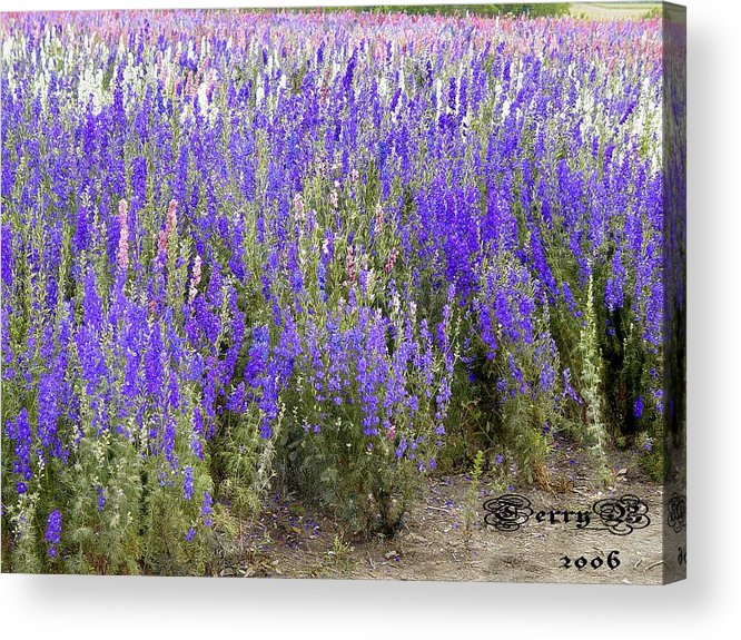 Landscape Acrylic Print featuring the photograph Texas Wildseed Farm by Terry Burgess