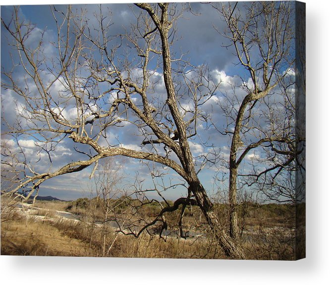 Dry Acrylic Print featuring the photograph Texas Winter One by Ana Villaronga