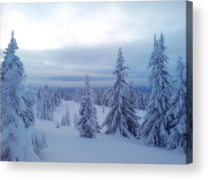 Trees Acrylic Print featuring the photograph The Blue Hour by Are Lund