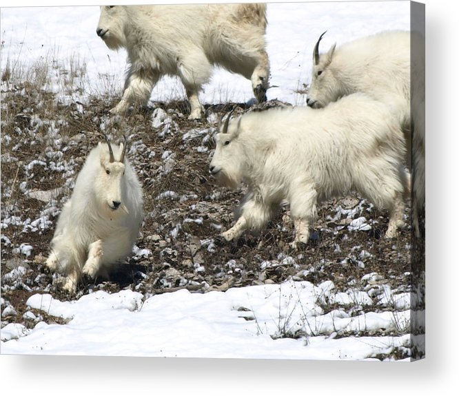 Animals Acrylic Print featuring the photograph The Chase by DeeLon Merritt