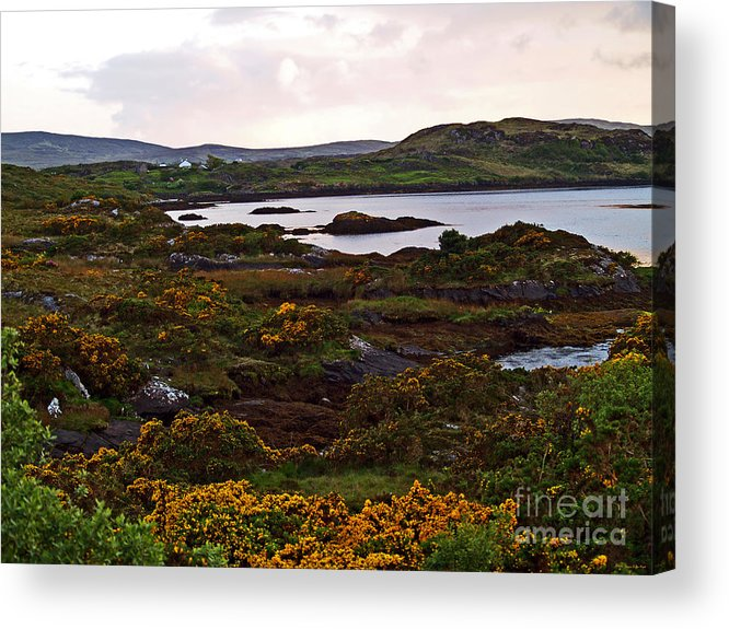 Fine Art Photography Acrylic Print featuring the photograph The Gorse It Was Abloomin by Patricia Griffin Brett