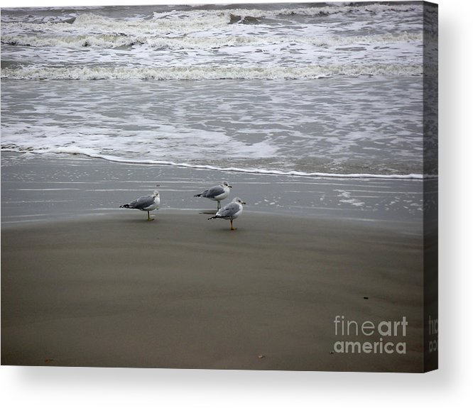 Nature Acrylic Print featuring the photograph The Gulf In Shades Of Gray - Formation by Lucyna A M Green