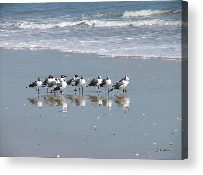 Beach Acrylic Print featuring the photograph The Gull Gang by Judy Waller