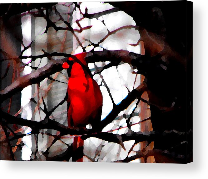 Birds Acrylic Print featuring the photograph The King Of Spring by Catherine Sprague