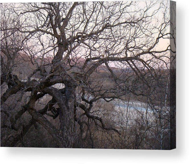 Pecan Tree Acrylic Print featuring the photograph The Mother Tree One by Ana Villaronga