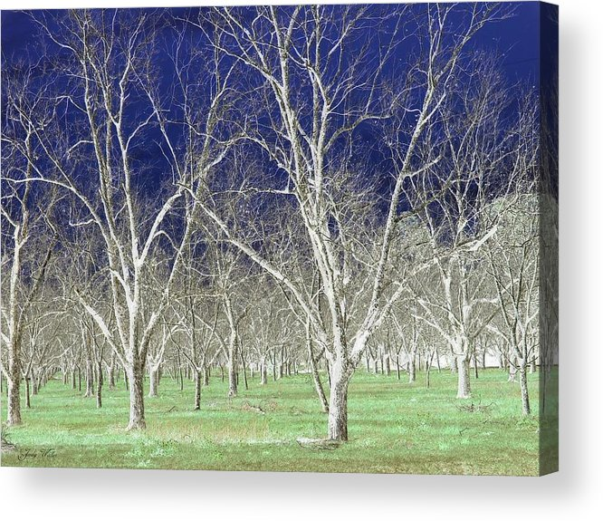 Pecan Acrylic Print featuring the photograph The Pecan Grove by Judy Waller