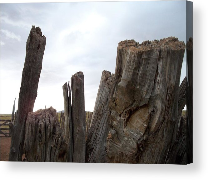 Nature Acrylic Print featuring the photograph ''the Tales We Could Tell...'' by Ernie Scott- Dust Rising Studios