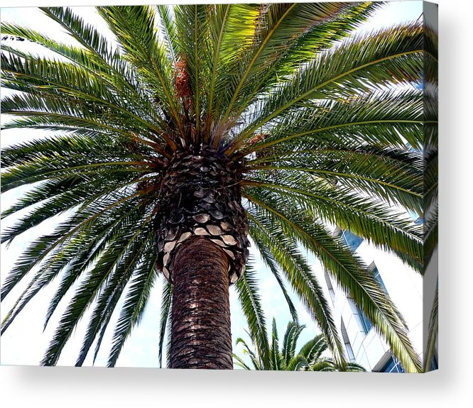 Palm Acrylic Print featuring the photograph The Top by Dmytro Toptygin