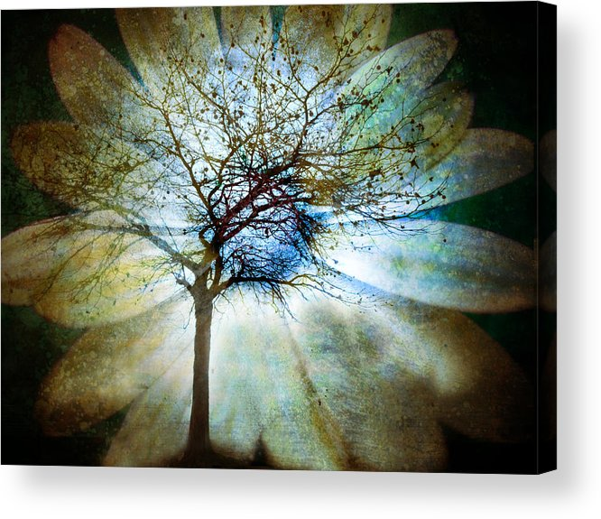 Trees Acrylic Print featuring the photograph The Truth Of Trees by Tara Turner
