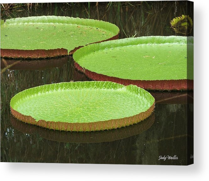 Water Acrylic Print featuring the photograph There Are Three by Judy Waller