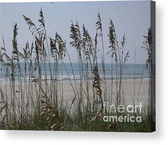 Florida Beach Near St. Augustine Acrylic Print featuring the photograph Thru The Sea Oats by Barb Montanye Meseroll