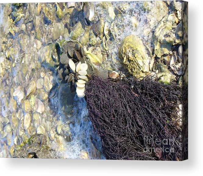 Ocean Acrylic Print featuring the photograph Tide Pool by Stephanie Richards