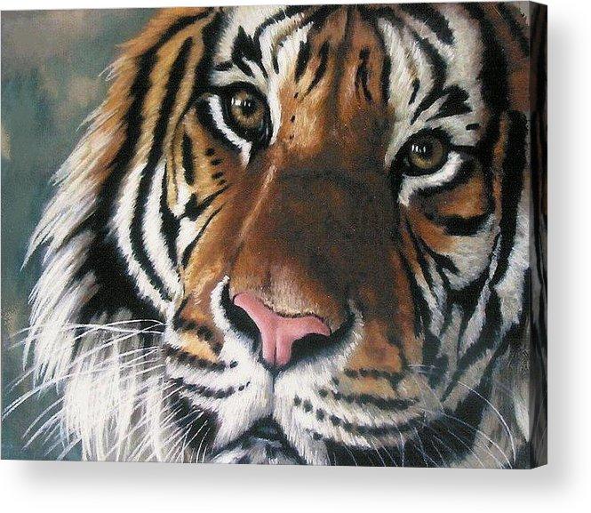 Tiger Acrylic Print featuring the pastel Tigger by Barbara Keith