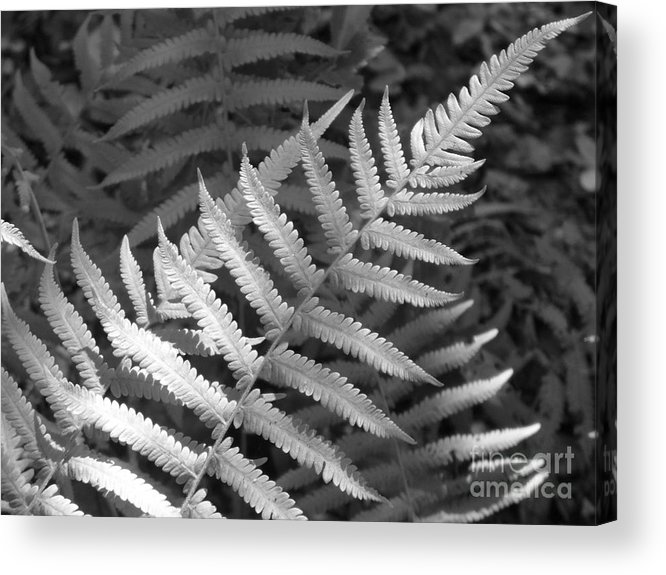 Black And White Acrylic Print featuring the photograph Tilted Fern by Stephanie Richards