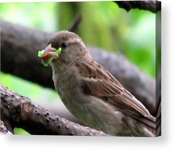 Bugs Acrylic Print featuring the photograph Time To Feed The Babies by Lisa Jayne Konopka