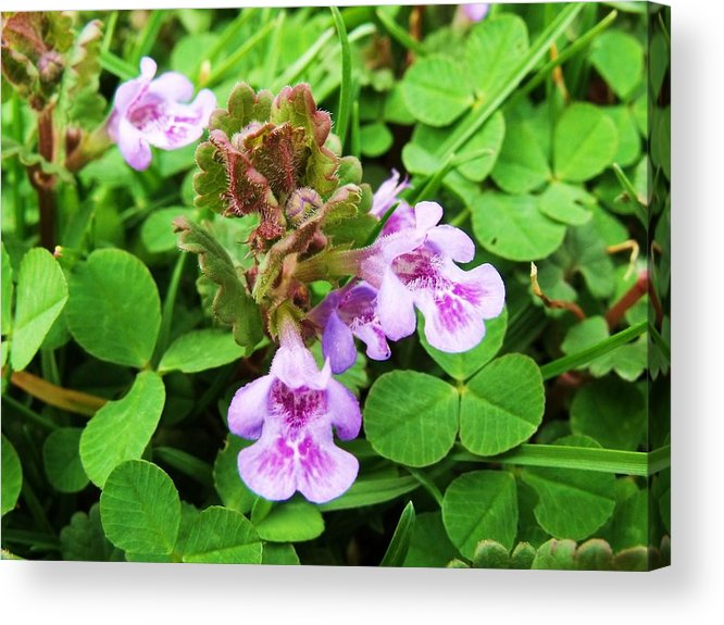 Flowers Acrylic Print featuring the photograph Tiny Flowers I by Anna Villarreal Garbis