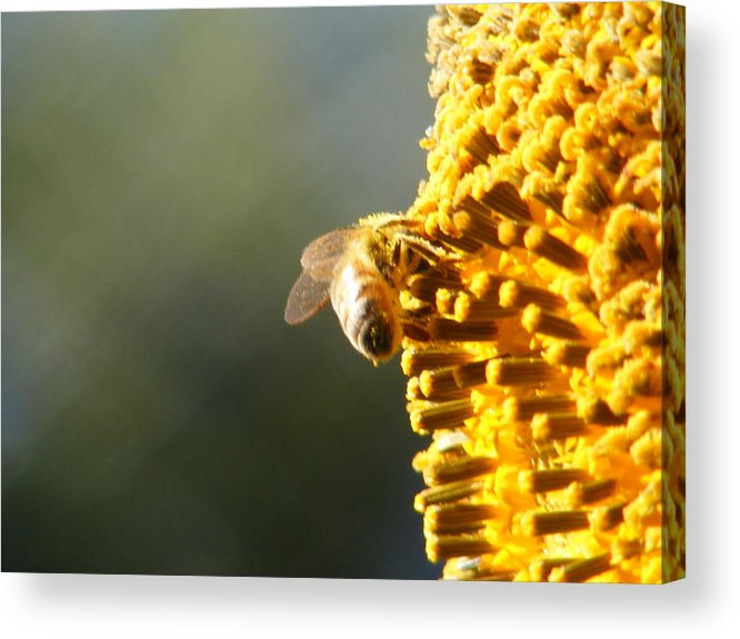 Bee Acrylic Print featuring the photograph Too Bee Or Not To Be by Gail Salitui