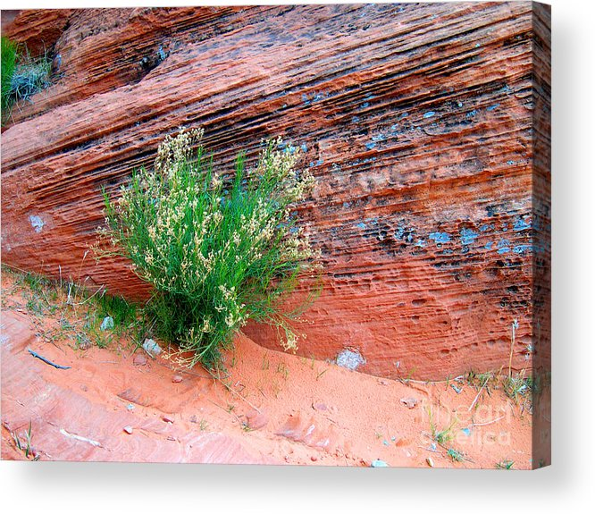 Photography Acrylic Print featuring the photograph Valley Of Fire by Addie Hocynec