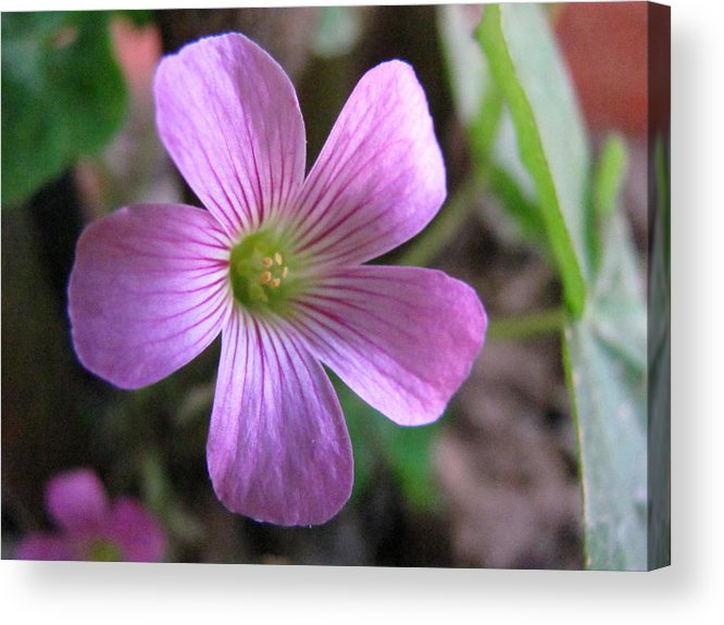 Flower Acrylic Print featuring the photograph Vibrant Nature by Justin Jacob