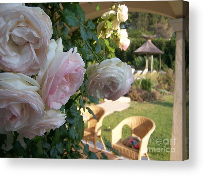 Roses Acrylic Print featuring the photograph Villa Roses by Nadine Rippelmeyer