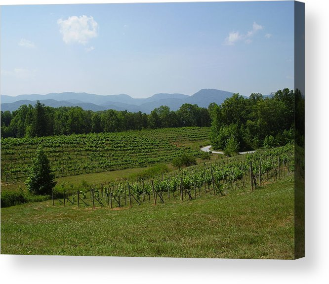 Vineyard Acrylic Print featuring the photograph Vineyard by Flavia Westerwelle