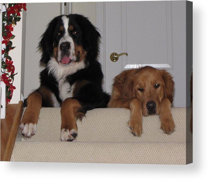 Dogs Acrylic Print featuring the photograph Waiting For Mom by Sylvia Wanty