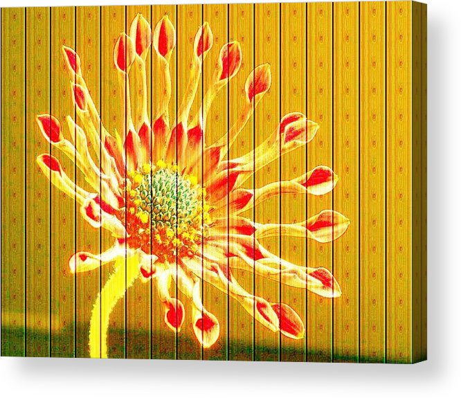 Flower Acrylic Print featuring the photograph Wall Flower by Tim Allen