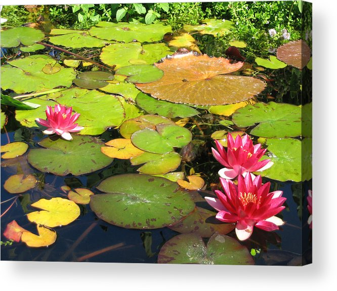 Travel Acrylic Print featuring the photograph Water Lilies At San Juan Capistrano by Beverlee Singer