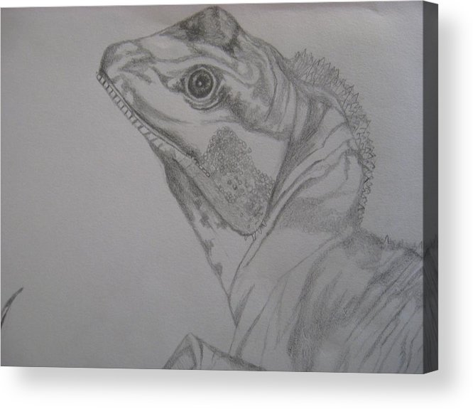 Dragon Acrylic Print featuring the drawing Waterdragon Up Close by Theodora Dimitrijevic