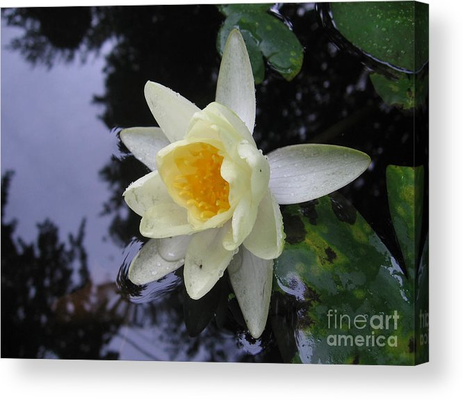 Waterlily Acrylic Print featuring the photograph Waterlily by Patricia Januszkiewicz
