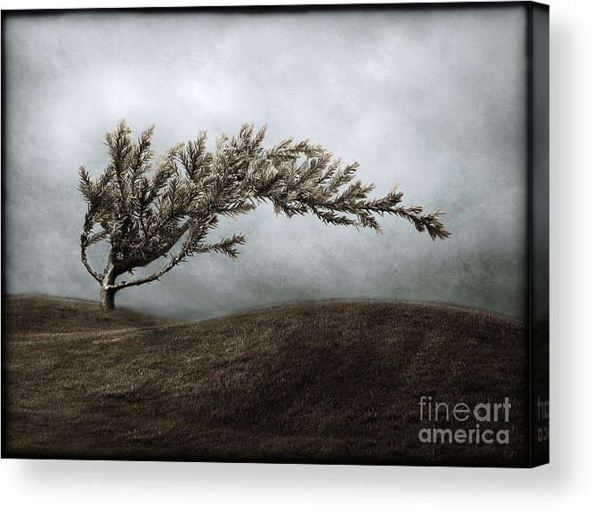 Bend Acrylic Print featuring the photograph We Break And We Bend And We Turn Ourselves Inside Out by Dana DiPasquale