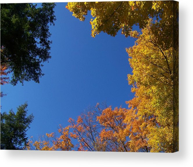 Trees Acrylic Print featuring the photograph What A Day - Photograph by Jackie Mueller-Jones