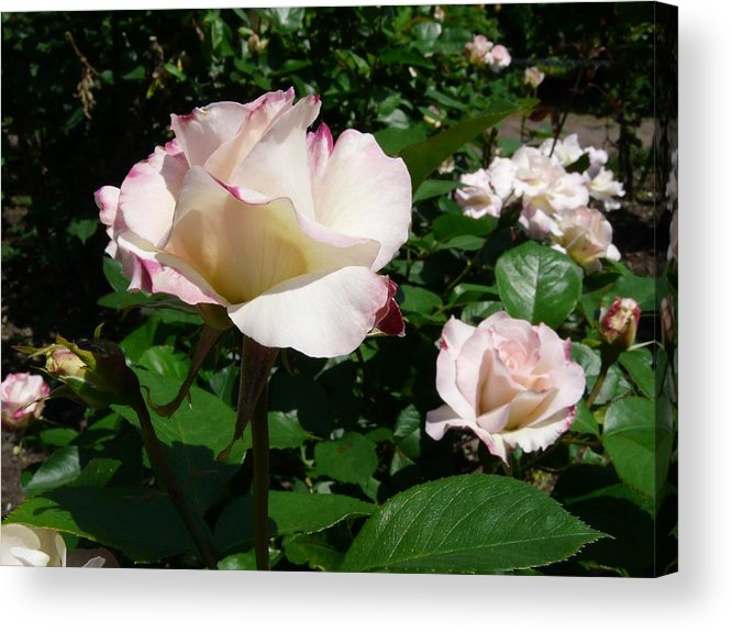 Flower Acrylic Print featuring the photograph When Springtime Comes Calling by Kendall Eutemey