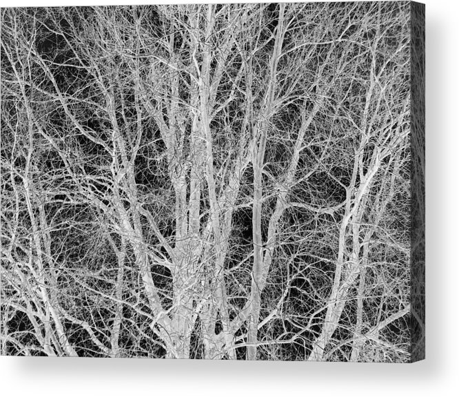 Tree Acrylic Print featuring the digital art White Branches by Munir Alawi