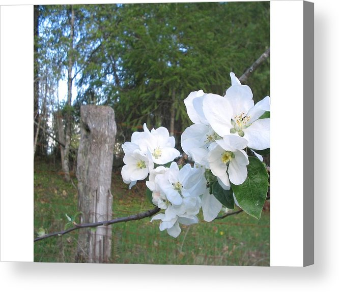 Flowers Acrylic Print featuring the photograph White Flowers by Valerie Josi