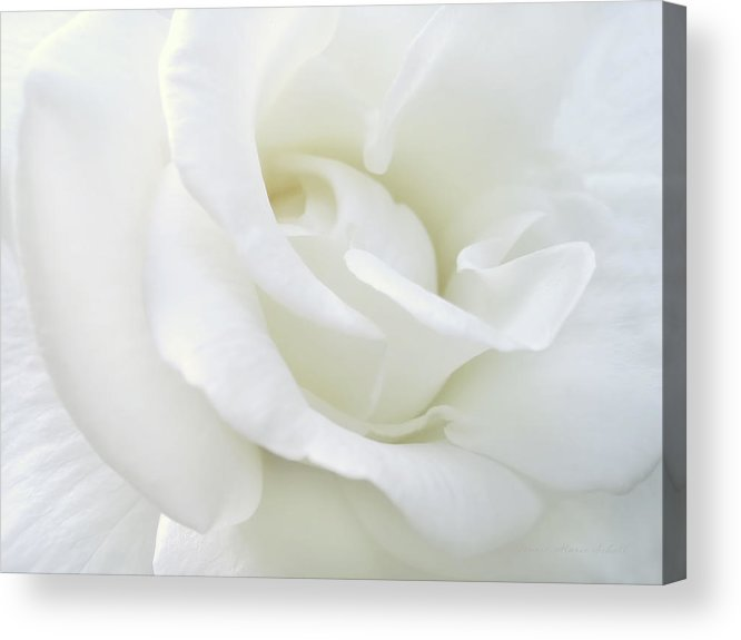Rose Acrylic Print featuring the photograph White Rose Angel Wings by Jennie Marie Schell