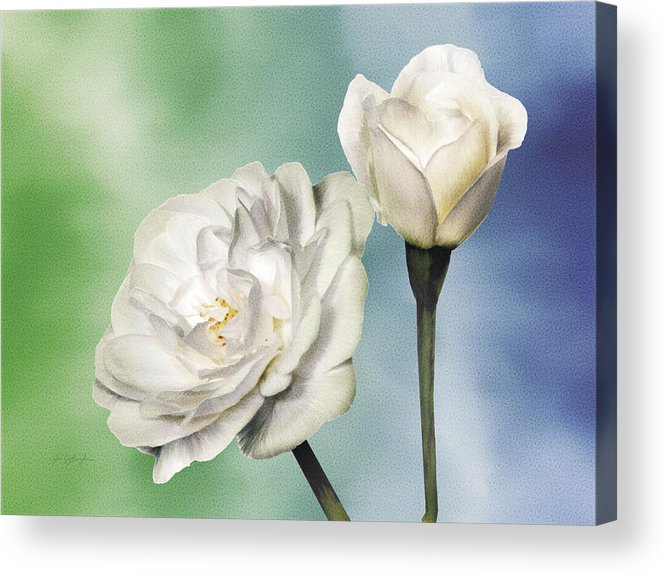 Rose Acrylic Print featuring the painting White Roses by Jan Baughman