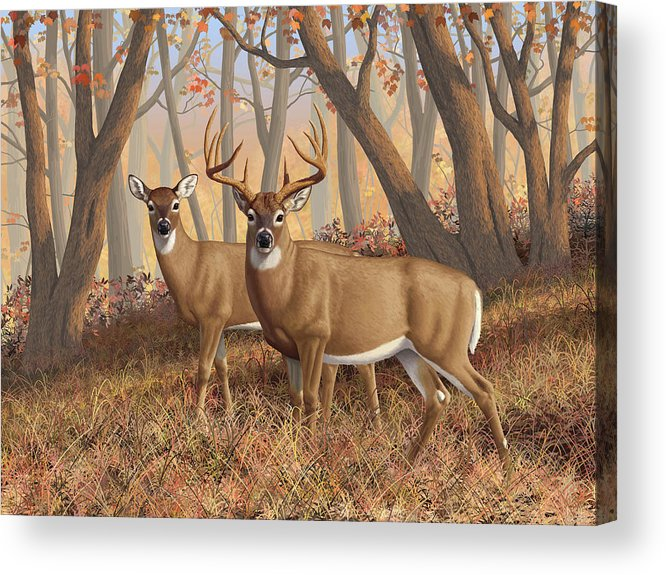 Deers Acrylic Print featuring the painting Whitetail Deer Painting - Fall Flame by Crista Forest