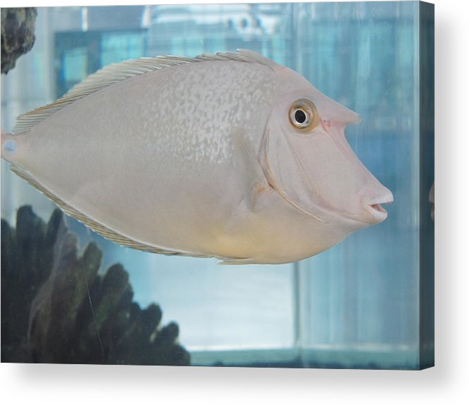 Fish Acrylic Print featuring the photograph Who Dat by Renee Holder