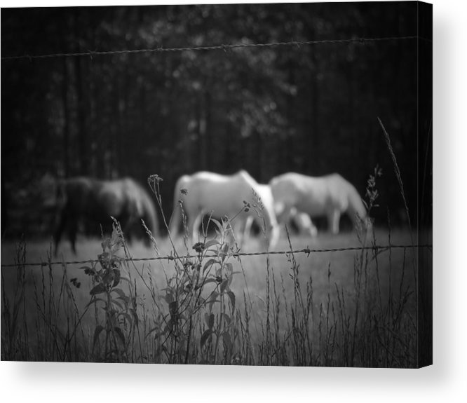 Horses Acrylic Print featuring the photograph Wild Restraint by Jessica Burgett