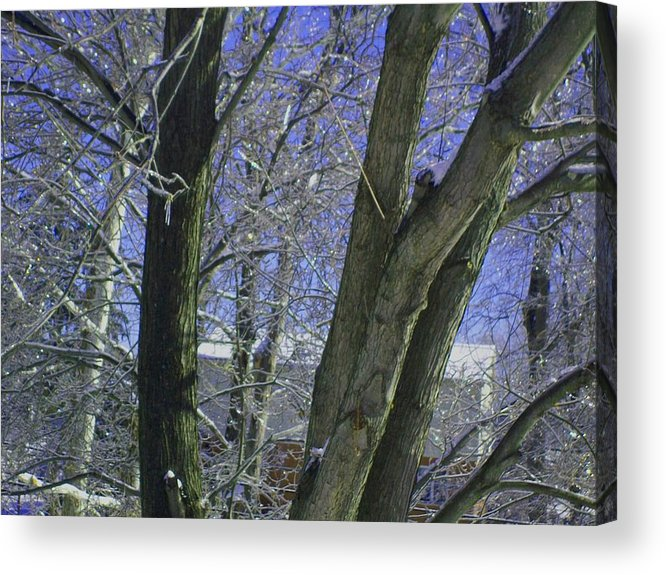 Tree Acrylic Print featuring the photograph Winter Trees by Misty VanPool