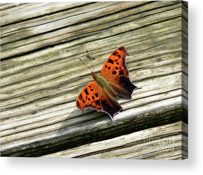 Butterfly Acrylic Print featuring the photograph Wood Stop by Joy Tudor