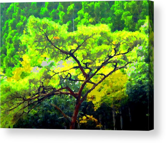 Trees Acrylic Print featuring the photograph Woods by Roberto Alamino
