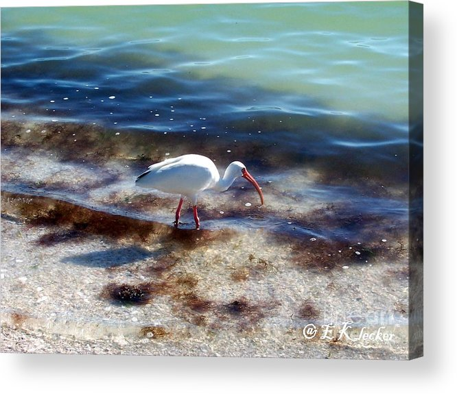 Bird Acrylic Print featuring the photograph Yay Seaweed by Elizabeth Klecker