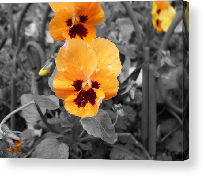 Flower Acrylic Print featuring the photograph Yellow by Jessica Burgett