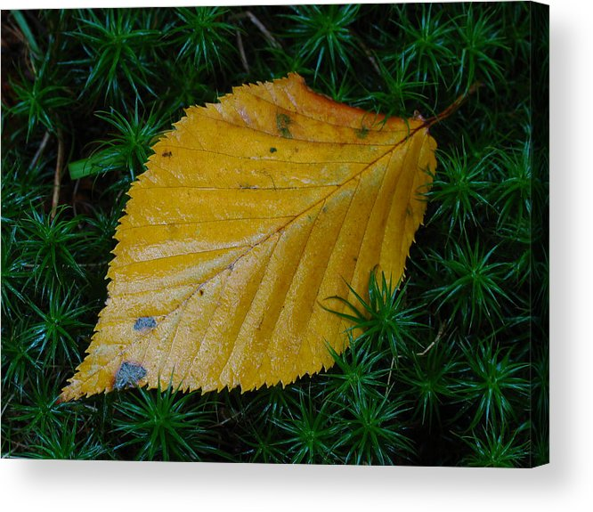 Autumn Acrylic Print featuring the photograph Yellow Leaf by Juergen Roth