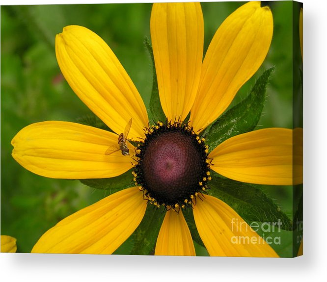 Yellow Acrylic Print featuring the photograph Yellow Petals by Joy Bradley