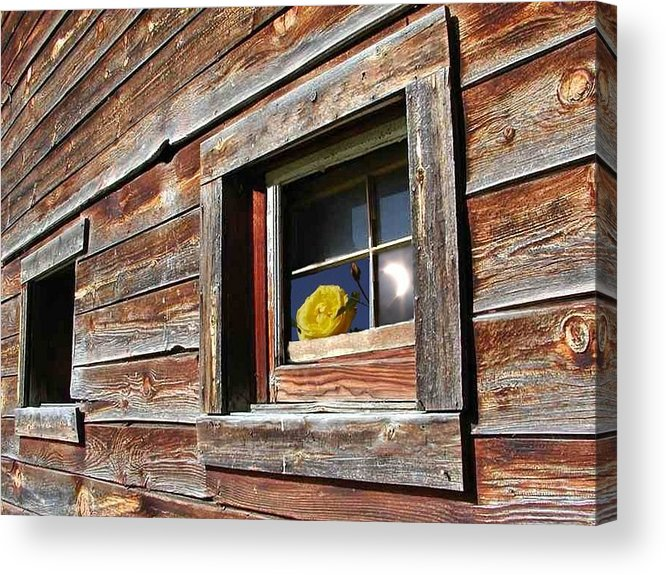 Barn Acrylic Print featuring the digital art Yellow Rose Eclipse by Tim Allen