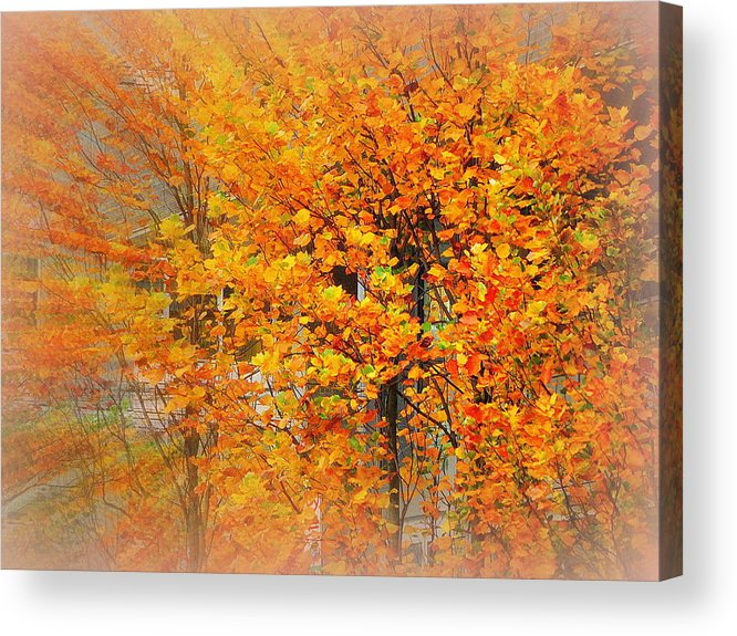 Greeting Card Acrylic Print featuring the photograph Maple Focal Zoom by Maro Kentros